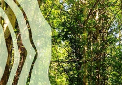 Le Reti di Imprese della filiera Foresta Legno - Opportunità imprenditoriale per la montagna
